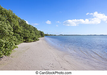 Black mangroves at low tide - Scenic shore bordered with...