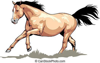 nice brown horse isolated on the white background