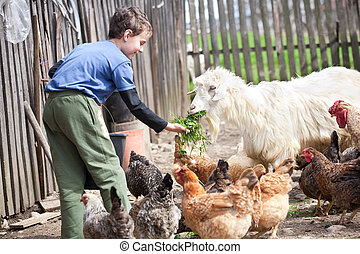 Country boy feeding the animals - Little farm boy feeding...