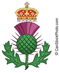 Thistle Symbol Of Scotland - The thistle symbol of SCotland...