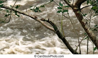 River Raging Through Branches - Closeup of branches with...