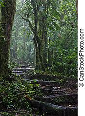 The Arenal Volcano Trail - The trail going up on the Arenal...