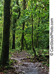Arenal Volcano Trail - The trail going up on the Arenal...