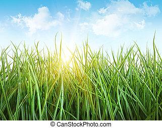 Tall wet grass against a blue sky