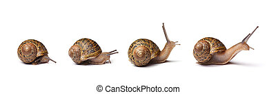 Set of snails isolated on white background
