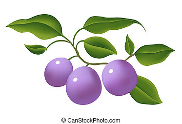 grape - Bunch of grape on white background