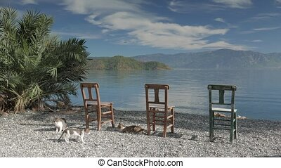 Wooden chairs and lonely palm tree. Panoramic view of a lake. 4k