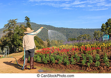 Thai people watering the flower in the garden in Chiang Mai,...