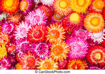 Colourful of paper flower for background - Colourful of...