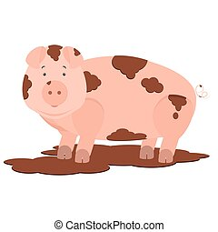 Pig in mud - Cute pig dirty in mud Isolated White background...