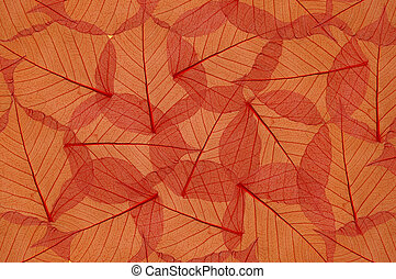 backdrop of colorful floral leaves
