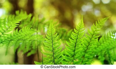 Sunny Ferns In The Forest Loop - Macro shot of fern plants...