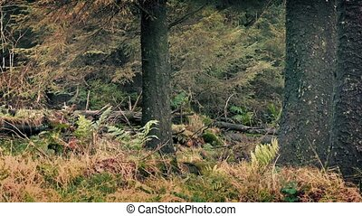 The Woods At Dusk - Peaceful scene of forest floor and tree...