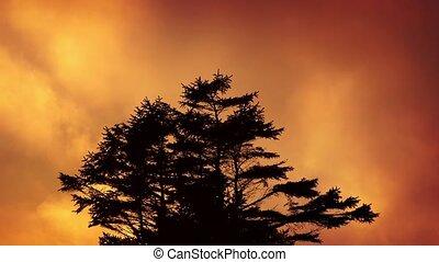 Tree Against Fiery Evening Sky