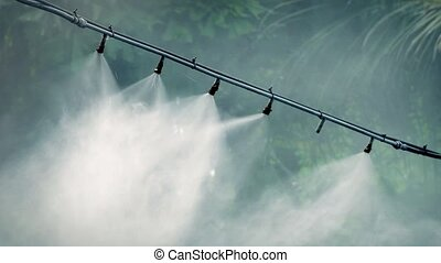 Water Vapor Irrigating Jungle Plant - Closeup of water line...