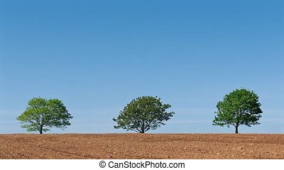 Trees On The Horizon In The Sun - Three trees in a row in...