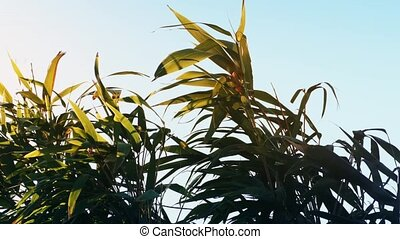 Tropical Plant In Strong Wind - Exotic plant leaves sway...