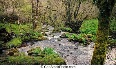 Woodland Scene With River - River in the woods with trees...