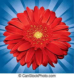 Gerbera Daisy - blue, daisy, flower, gerbera, illustration,...