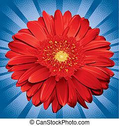 Gerbera Daisy - blue, daisy, flower, gerbera, illustration,...