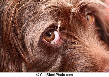 Part of a muzzle with an eye of a brown puppy removed close...