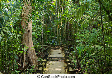 Jungle in Thailand - Path in a tropical rainforest in...