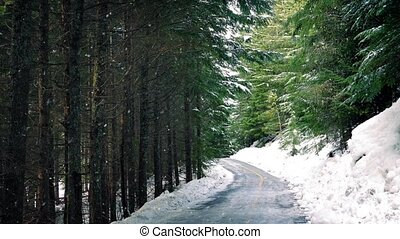 Road Through The Woods Snowfall - Road in dense woodland...