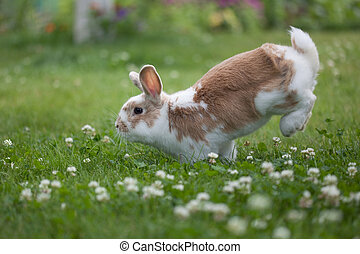 Rabbit holiday - Funny and gentle rabbit jumping on grass