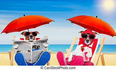 funny couple of dogs in love at the beach - dog reading...