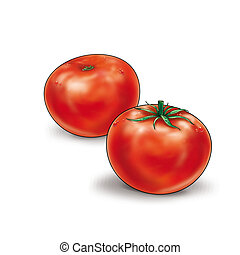 Tomatoes Vegetable - Red two Tomatoes Vegetable Isolated on...