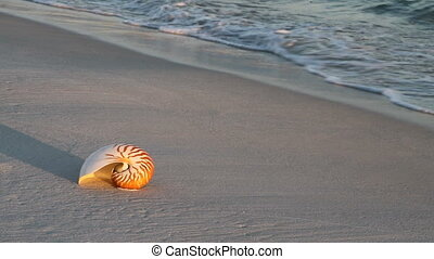 Nautilus And Waves - Nautilus shell rests in the sand while...