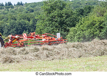Rotary hay rake turning dry pasture grass for baling for hay...