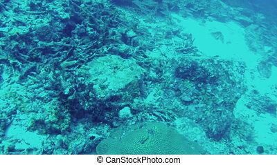 Diving Shoals of fish swimming away from camera - Scuba...