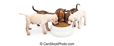 Four Puppies Eating Big Bowl of Kibble