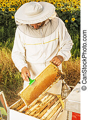 Beekeeper - A beekeeper checking his hive