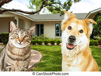 Happy Dog and Cat In Front Of House