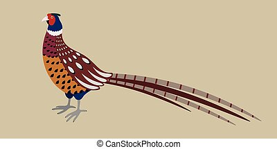 Cartoon detailed pheasant isolated on grey background,...