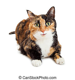 Happy Smiling Calico Cat - Pretty orange and black color...