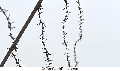 Barbed wire on background of gray sky prison conclusion -...