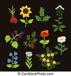 Decorative plants set - Decorative various vector plants set