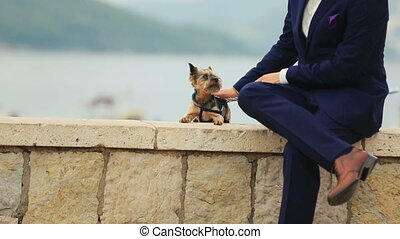 Handsome groom petting little cute dog terrier in...