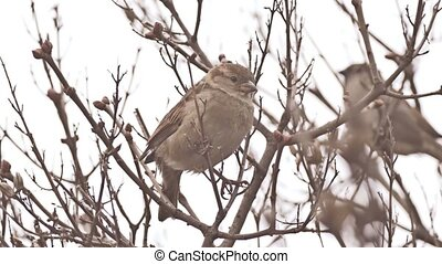 bird sparrow sitting on nature tree branch - bird sparrow...