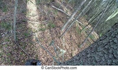 View of logger cut down tree and sawed branches - Top view...