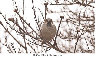 bird sparrow sitting on nature branch tree