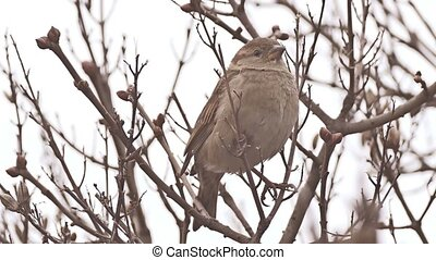sparrow bird sitting on nature branch tree