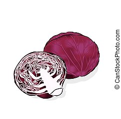 red cabbage - A vegetable is often used raw for salads and...