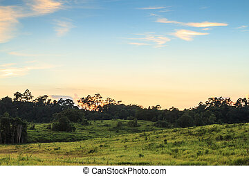 Sunset At Khao Yai national park, Thailand.