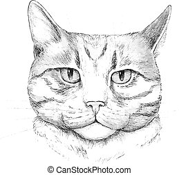 Cat Hand-drawn cat, vector illustration, isolated on a white...