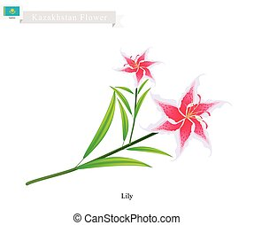 Beauitful Lily, The Popular Flower of Kazakhstan -...
