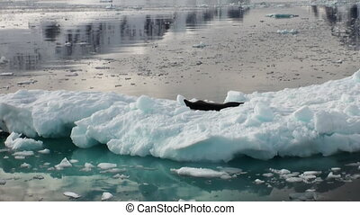 Leopard Seal sleeping on an Iceberg in Antarctica - Crying...